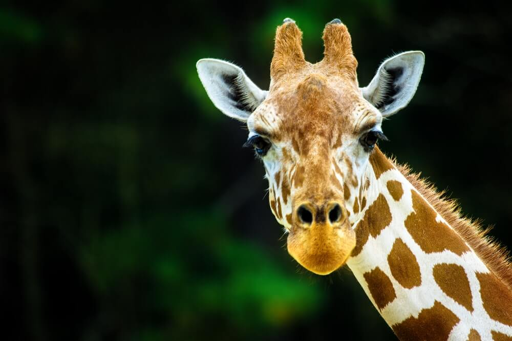 Hotels near chester zoo with parking